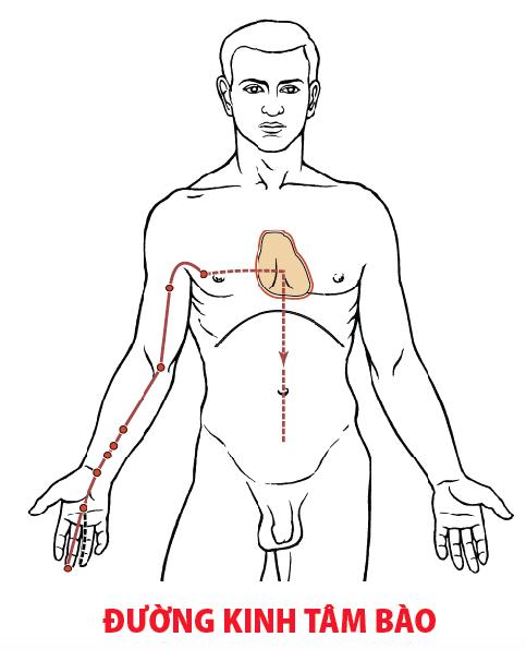 Đường kinh tâm bào