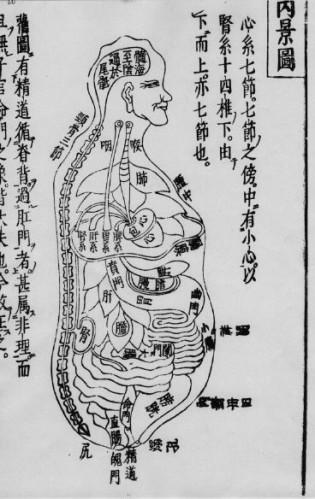 Đồ hình giải phẫu y học cổ truyền phương đông