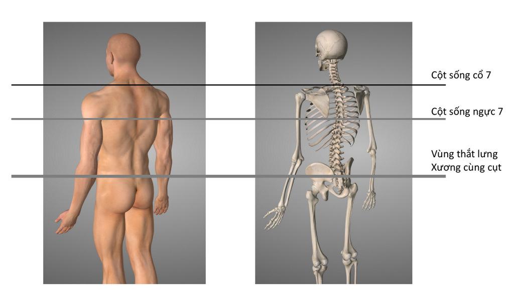 3 vùng quan trọng trên cột sống