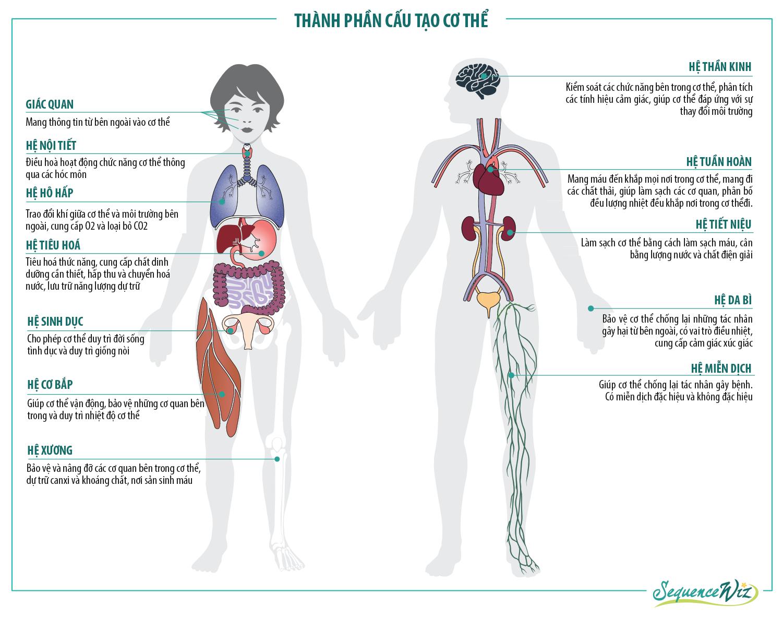 hệ cơ quan chính trong cơ thể
