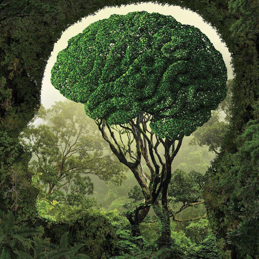 Phương pháp học trị liệu tự nhiên căn bản